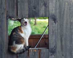 yawning cat by Perdita *, via 500px