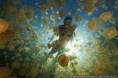 Swim in Jellyfish Lake - Palau, Micronesia