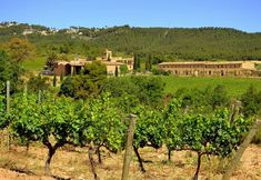 The Best Wine Towns to Visit in Spain