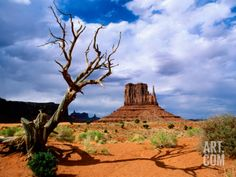 Monument Valley Photographic Print by Douglas Steakley at Art.com