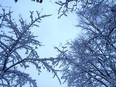 Winter in Savonlinna, Finland Finland, Winter, Nature, Winter Time, Naturaleza, Nature Illustration, Off Grid, Winter Fashion, Natural