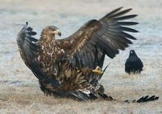 Ippon !! by Harry  Eggens on 500px