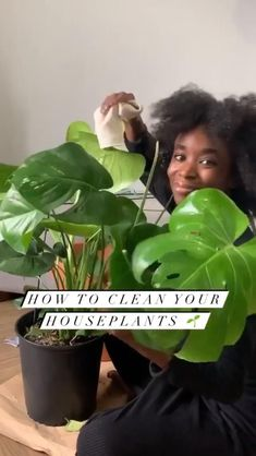 How to clean houseplant leaves. Here's my simple houseplant cleaning recipe, perfect for removing dust from plant leaves. In this episode of Bri Books, I'm sharing 5 easy houseplants for your bedroom. Houseplant Cleaner Recipe: 1. 1/4 gallon of water 2. 1/4 cup vinegar 3. 5-10 drops of non-toxic liquid soap 4. Combine ingredients in a spray bottle and spritz onto plant leaves, then gently wipe dry with clean towel #plantlover #indoorplants #houseplants #plants #monstera #houseplantdecor Easy House Plants, House Plants Decor, Plant Decor, Potted Plants, Garden Plants, Indoor Plants, Plante Monstera, Household Plants, Inside Plants