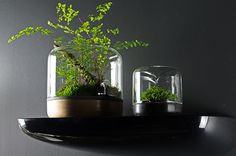 The easy-care, modular desktop terrarium is here. Choose from 3 microclimates to support the growth of your favourite terrarium plants.