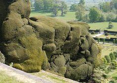 Powis Castle yews