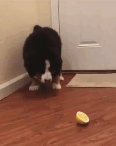 Here's a funny reaction doggies on lemon
