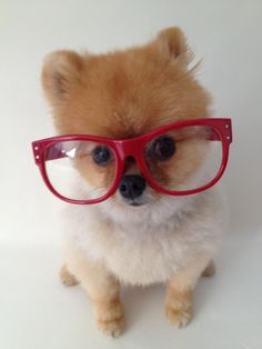 Do these glasses make my head look big? (Haha, more like completely small!)                      :D