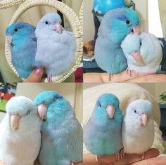 beautiful birdies