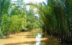 Canal à Ben Tre Vietnam, Country Life, Vineyard, Photos, Tropical, River, Plants, Outdoor, Beautiful