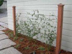 wire trellis for climbing roses.