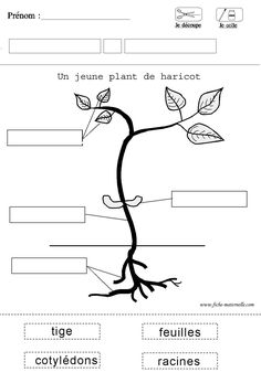worksheet science for kindergarten Science Worksheets, Worksheets For Kids, Science Activities, French Teacher, Teaching French, Plant Science, Science And Nature, Teaching Tools, Teaching Resources