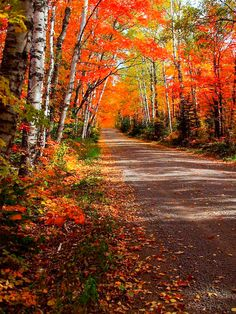Country road in fall by James and Melissa Peterson