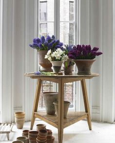 Bulbs | Martha Stewart Living - The long-awaited drama of a cluster of hyacinths and daffodils pushing up from the earth doesn't quite carry over to a few paltry blooms in a vase. Imitate this spring ritual by rearranging several bouquets of same-color blossoms in clay and terra-cotta pots and urns.