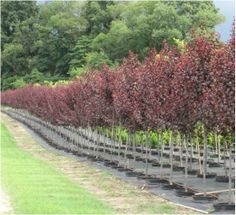 New Life Nursery-wholesale plant supplier Bridgeton NJ -Serving clients from New England and throughout the Mid-Atlantic States. www.facebook.com/newlifenurseryinc Call 856-455-3601 Wholesale Plant Nursery, Mid Atlantic States, Wholesale Plants, New Life, New England, Sidewalk, Facebook, Sidewalks, Pavement