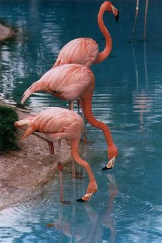 I adore Flamingos, remind me Miami, the sun, tropical weather ...