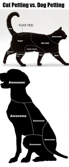 Cat Petting versus Dog Petting...interesting enough, all  of my cats let me pet them wherever.