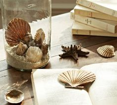Sea shells displayed in a vase with sand.