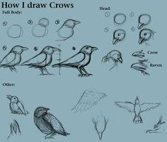 How I draw Crows by ~CreatTheCrow on deviantART