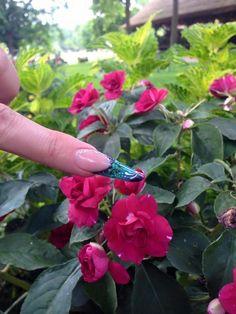BrillBird Nails, Plants, Finger Nails, Ongles, Plant, Nail, Planets, Nail Manicure