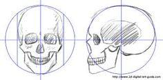 Image result for skull proportions