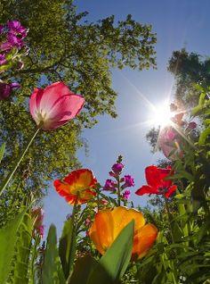 Bug's eye view of flower garden