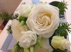 Lovely White Roses ♥  ~ ~