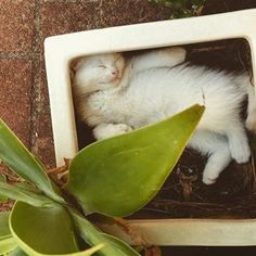 Quando ele tenta assumir a forma de um recipiente qualquer onde ele se enfiou. | 30 imagens reais demais para todo mundo que vive com um gato