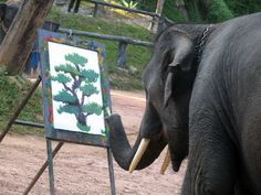 Diverting Diversions: He is an artist, regardless of species. This elephant is my new hero.
