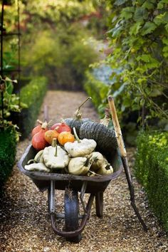 The Suffolk home of Tom Hoblyn, which, thanks to a year-round harvest of trained fruit trees and vegetables, is more than just a feast for the eyes. Gardening For Beginners, Gardening Tips, Best Pumpkin Patches, Herbaceous Border, Squashes, Autumn Garden, Harvest Garden, Small Gardens, Fall Harvest