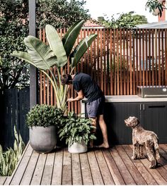 Backyard inspo - How good are long weekends Gardens love it just as Outdoor Plants, Outdoor Areas, Outdoor Rooms, Outdoor Bbq Kitchen, Outdoor Kitchen Design, Balkon Design, Garden Screening, Alfresco Area, Outdoor Entertaining