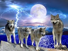 Lightening wolves - Dogs Wallpaper ID 1990207 - Desktop Nexus Animals