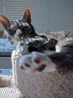 Mr. Darcy had outgrown his cat towerhttps://i.imgur.com/nOTgiFg.jpg