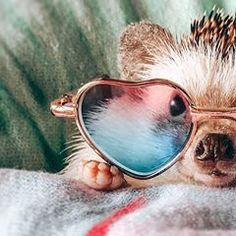 Dec 2019 - About little hedgehog and his life✨. See more ideas about Cute hedgehog, Hedgehog and Cute animals. Baby Animals Super Cute, Super Cute Puppies, Cute Little Animals, Cute Funny Animals, Cute Cats, Baby Animals Pictures, Cute Animal Photos, Animals And Pets, Hedgehog Pet Cage