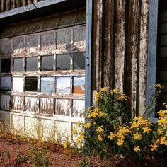 Vacation inspiration - beautiful hand painted garage door with lovely yellow flowers in Minnesota's North Shore (Grand Marais). #inspiration #inspiration #streetart #lakesuperior #usa #us #minnesota