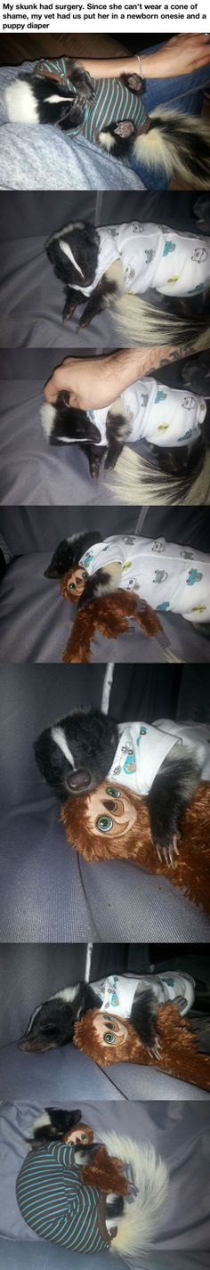 Pet skunk in a onesie.