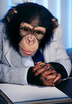 Mr Barrow, CEO of Worldwide Chimp reflects on his role in the global financial downturn.