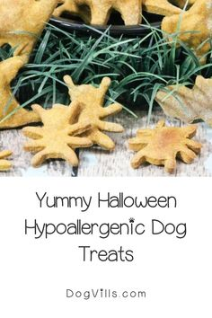 You already have your pup on the best hypoallergenic dog food, but finding great hypoallergenic dog treats can seem a little daunting at times.