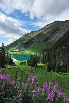 Wildflower at Crested Butte, Colorado, USA Beautiful  places  to  visit  in Colorado !