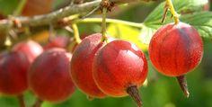 Garden Park, Edible Garden, Compost, Pergola, Flora, Berries, Fruit, Gardening, Plants