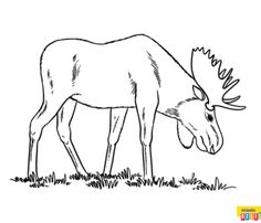 Zwierzęta leśne - łoś Coloring Pages, Moose Art, Animals, Crafts, Quote Coloring Pages, Animales, Manualidades, Animaux, Animal