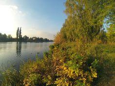Jesień nad kanałem żerańskim