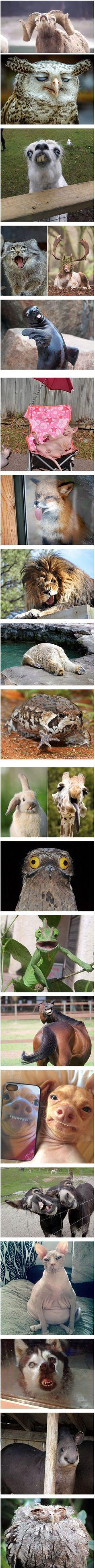 Extremely unphotogenic animals