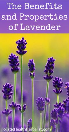 The Benefits and Properties of Lavender- Learn about the amazing benefits, properties, and uses of lavender, an age old remedy for stress, restless sleep, and overstrung nerves.