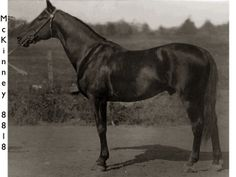 "McKinney was stabled in the ""Block Barn"", originally known as ""McKinney Stables"".   He is one of the 4 founding stallions of the record breaking trotters.   His stable mate was Axworthy, another of the 4 great stallions."
