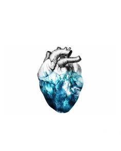 Heart of the ocean Anatomic Heart Wall Art Print Prints Poster Posters…