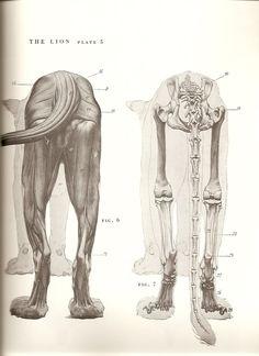 anatomy study for artists pdf