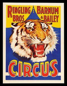 Ringling Bros and Barnum & Baliey Tiger Circus Poster - Vinage Circus Animal Poster - Free Vintage Posters, Vintage Travel Posters, Art Prin. Vintage Circus Posters, Vintage Advertising Posters, Retro Poster, Vintage Travel Posters, Vintage Advertisements, Ringling Brothers Circus, Old Circus, Circus Art, Circus Room