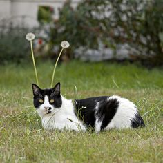 Caturday: My Favorite Martian.
