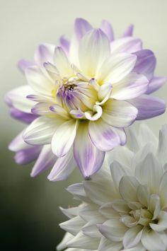 gardening macro flower