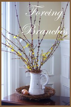 Forcing flowering branches how-to